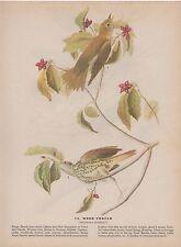 """1942 Vintage AUDUBON BIRDS #73 """"Wood Thrush"""" Color Art Plate Lithograph"""