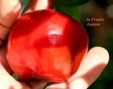 Chili Giant Rocoto @ Capsicum pubescens @ große Früchte @ Baumchili @ 10 Samen