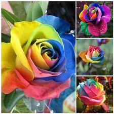 Bunter Regenbogen-Blumensamen-dekorative Blumen Grass Seeds Garden