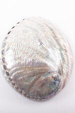 Abalone Shell Paua Shellfish Haliotis iris Seashell Gmelin, 1791 Sea Collectible