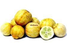 10 Graines Bio Concombre Citron ,Organic Cucumber Crystal Lemon seeds