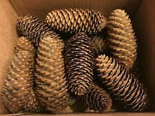 16 Craft Supplies Christmas Wreath Spruce pine cones Home Decorations pinecones