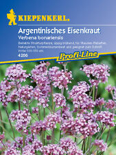 Kiepenkerl - Verveine Argentine 4286 verveine populaire Plant d'arbre