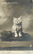 RPPC Postcard Landor's Cat Studies Long Haired Tabby Old Soldier From Botany Bay