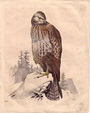Original-Kupferstiche über Zoologie & Tiere (1800-1899)