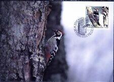 Woodpecker White-backed Dendrocopos Leucotos Sweden Maxi FDC Card 1994