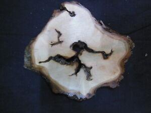 "K-16_  Wood Trivet Rustic Maple Burl 7""x 6"""