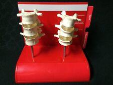 Vintage Evista Anatomical Model Human Spine Vertebrae Vertebral