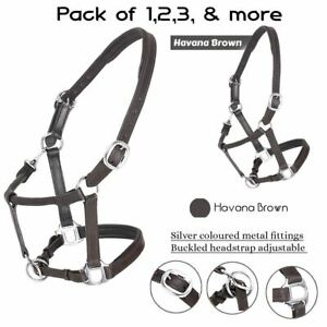 Padded Headcollar Leather Halters Silver Fittings Adjustable Stable Pack 2 to 10