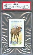 1922 Adkin & Sons GNU ANTELOPE Wild Animals of the World Trade Card PSA 6