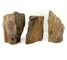 Wyoming Petrified Wood - (3) Awesome pieces = 3 lbs 5 oz Wwy01