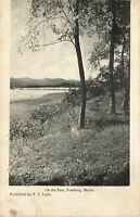 Fryeburg Maine~Trees On the Saco River~1905 B&W Postcard
