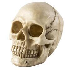 Human Skull UK 1:1 Resin Lifesize Replica Realistic Gothic Halloween Ornament
