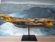 "RIESIGE Treibholz Skulptur ""Riesenhai"" von Neptun Arts SKUL 099 Giant Shark TOP!"