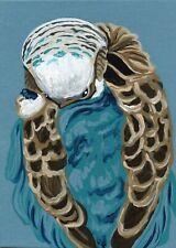 ACEO ATC Original Miniature Painting Parakeet Budgie Bird Art -Carla Smale