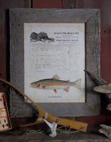 Vintage Fly Fishing Lure Art Print Unframed Rainbow Trout Flies Fish Wall Decor