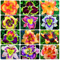 100 PCS Seeds Hybrid Daylily Flowers Plants Hemerocallis Lily Bonsai 2019 Rare N