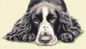 ENGLISH SPRINGER SPANIEL, black/white dog full cross stitch kit *Jann Designs