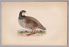 Reclamos-red-legged Partridge-pinchazo, madera altkoloriert clave para 1890