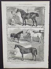 Illustrated London News Single-Page A3#14 Jul. 1864 Prize Horses at Islington