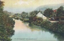 SALAMANCA NY – Allegheny River View Rotograph Postcard - 1909
