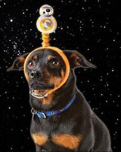 STAR WARS Droid dog pet cat headband BB-8 BB8 Halloween Costume S M L S/M or M/L