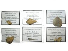 More details for carboniferous pennsylvanian brachiopod mollusc fossil collection 30 sp wewoka