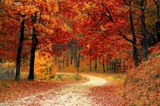 WOODLAND/ FOREST PATH AUTUMN CANVAS PICTURE POSTER PRINT WALL ART UNFRAMED #618