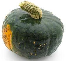 Winter Squash Burgess Buttercup 25 seeds * Heirloom * Non GMO * CombSH K25