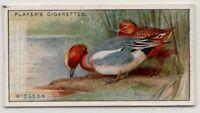Eurasian wigeon Wideon Duck Gamebird c90  Y/O Ad Trade Card