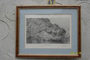 Print called 'Croc Monster', signed by K.J. Haylar