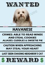 Havanese Dog Wanted Poster Flex Fridge Magnet 2.75 X 4.0 See Video