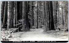 NORTHERN CALIFORNIA, CA     Redwoods on EEL RIVER  c1920s Bowman Photo  Postcard