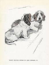 PETIT BASSET GRIFFON VENDEEN DOG GREETINGS NOTE CARD TWO DOGS PBGV