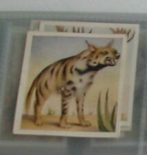 #1 Striped hyena - Animal trade card