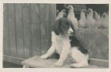 POSTCARD  ANIMALS  DOGS  On Guard  Duty