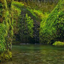 """Peter Lik Photo Art Element 9.75"""" x 9.75"""" Squared Lik2 #172 Oregon like Allure"""