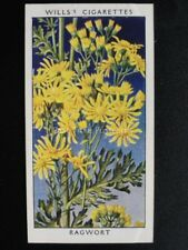 No.32 RAGWORT - Wild Flowers (Adhesive) - W.D.& H.O.Wills 1936