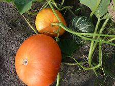 Kürbis 3 Sorten (Orange,Grüne und Gelbe)Saatgut  15 Samen, je 5 Stück Samen