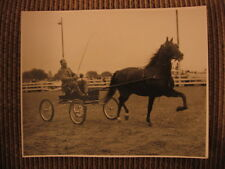 6X Grand Champion Morgan Windcrest Donfield & John Lydon up Original Horse Photo