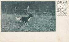 Antique Postcard c1905-07 Hunting Dog National Sportsman Boston, Ma 18797