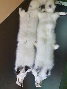 White fox peltwithout black stripe on the back , fox pelt, fox pelts, arctic