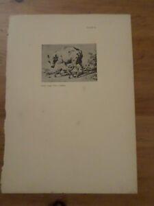 Altes Papier-, Antike Seite, Kunstdrucke, Ewe Und Two Lambs , Schafe, Art