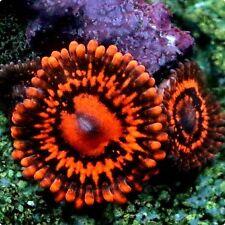Corals & Live Rock