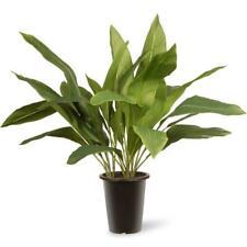 National Tree Company Aspidistra Plant Artificial Indoor Outdoor Garden Accent