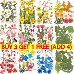 Real Dried Press Flower For Wedding Home Candle Epoxy Resin Jewelry Making Craft