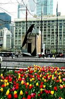 Chicago Tulips & Picasso original signed Giclee photograph by Arnold