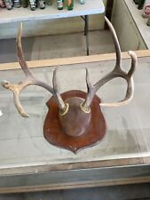New listing Nice Whitetail Deer Antlers Plaque Mount Rack Taxidermy Skull Horns 10 Point
