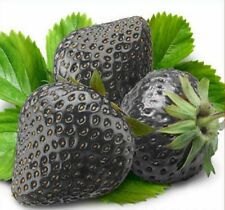 200 Black Strawberry Seeds Fragaria Ananassa Organic Fruit Bulk Seed S005