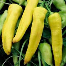 CAPSICUM 'Sweet Banana' 30+ seeds UNUSUAL heirloom yellow Hungarian wax pepper